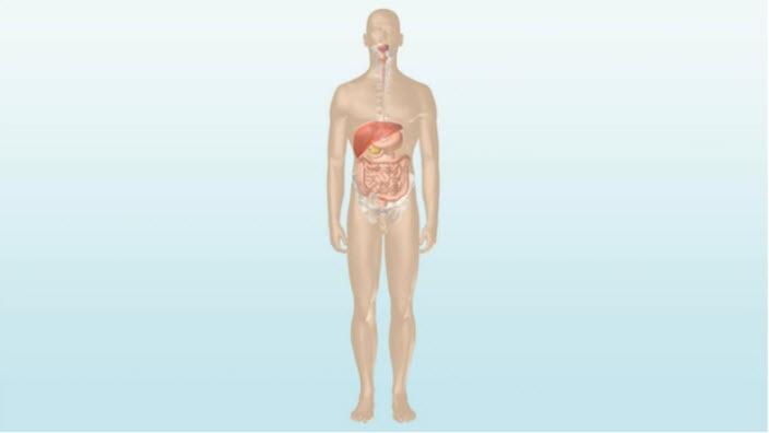 Πώς λειτουργεί το πεπτικό σύστημα